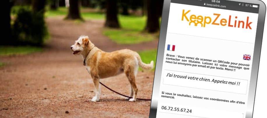 chien-trouve-keepzelink-1-str
